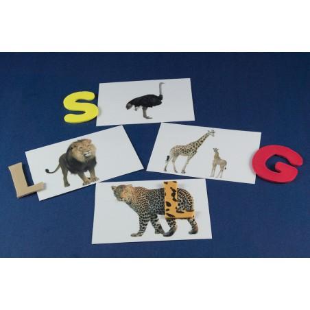 Litera De Inceput Animale Salbatice